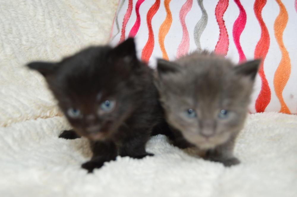 Jael & Rebekah 4 wks (3).JPG