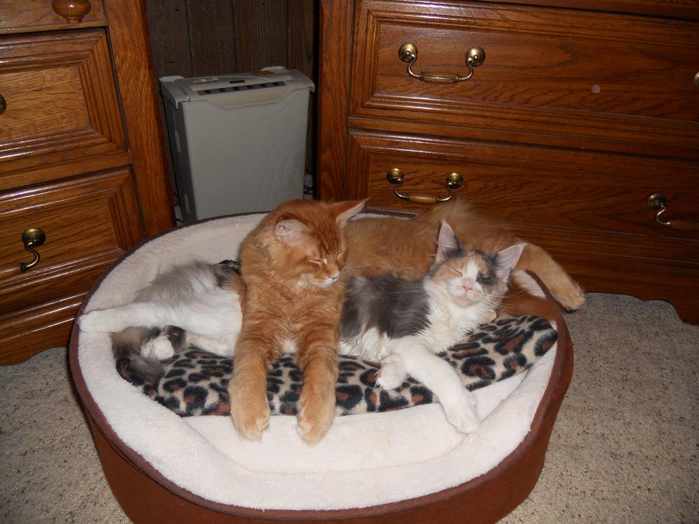 Dolly & Kramer (Gerbera & Gavin) (3).JPG