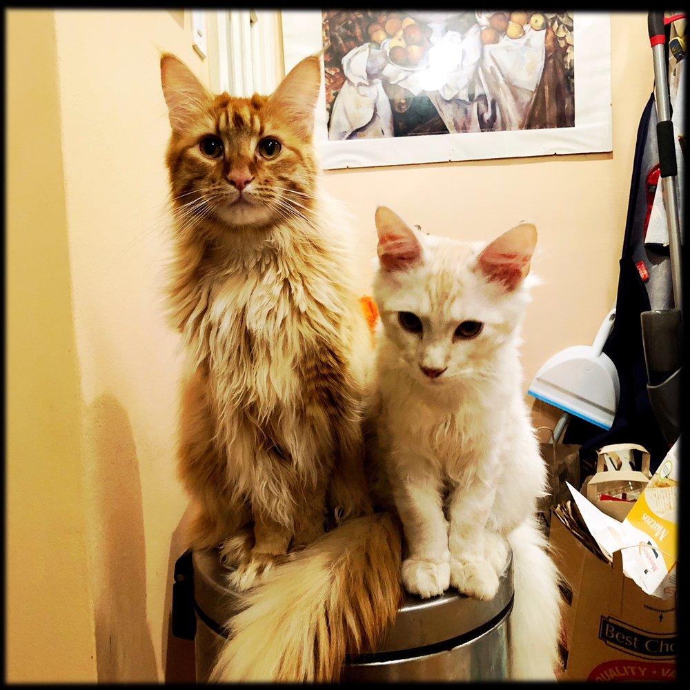 Loki & Sheru1.jpeg