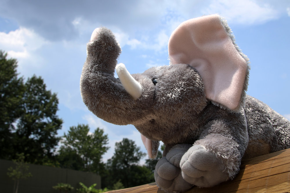 Elephant Plush 032.jpg