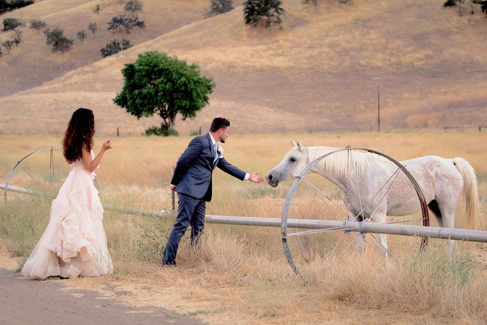 Bride Groom Horse SM.jpg