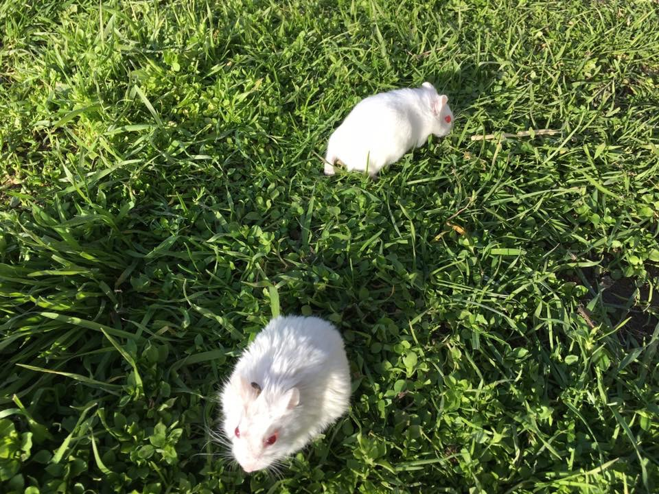 Hamsters3.JPG