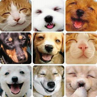 In 2012  National Pet Week is Smiling Dog And Cat