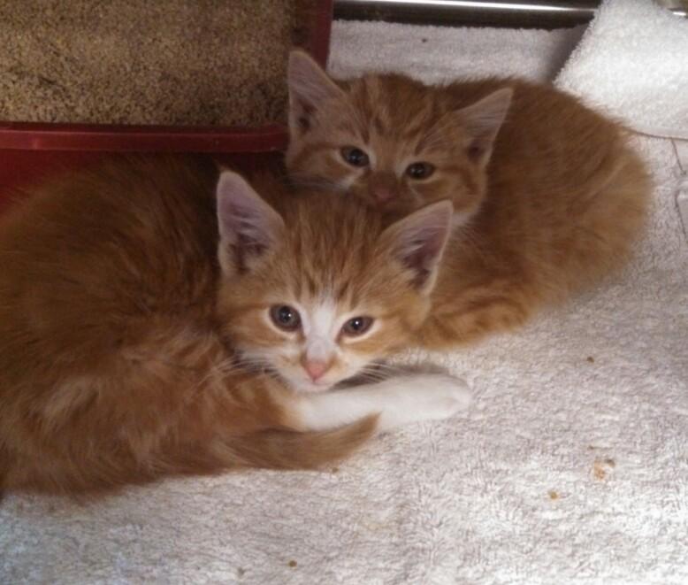 impound kittens