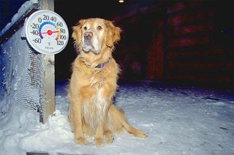 Dog in frigid winter temperatures