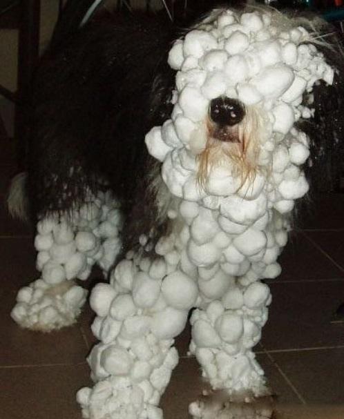 dogs-snow-balls-0[1]