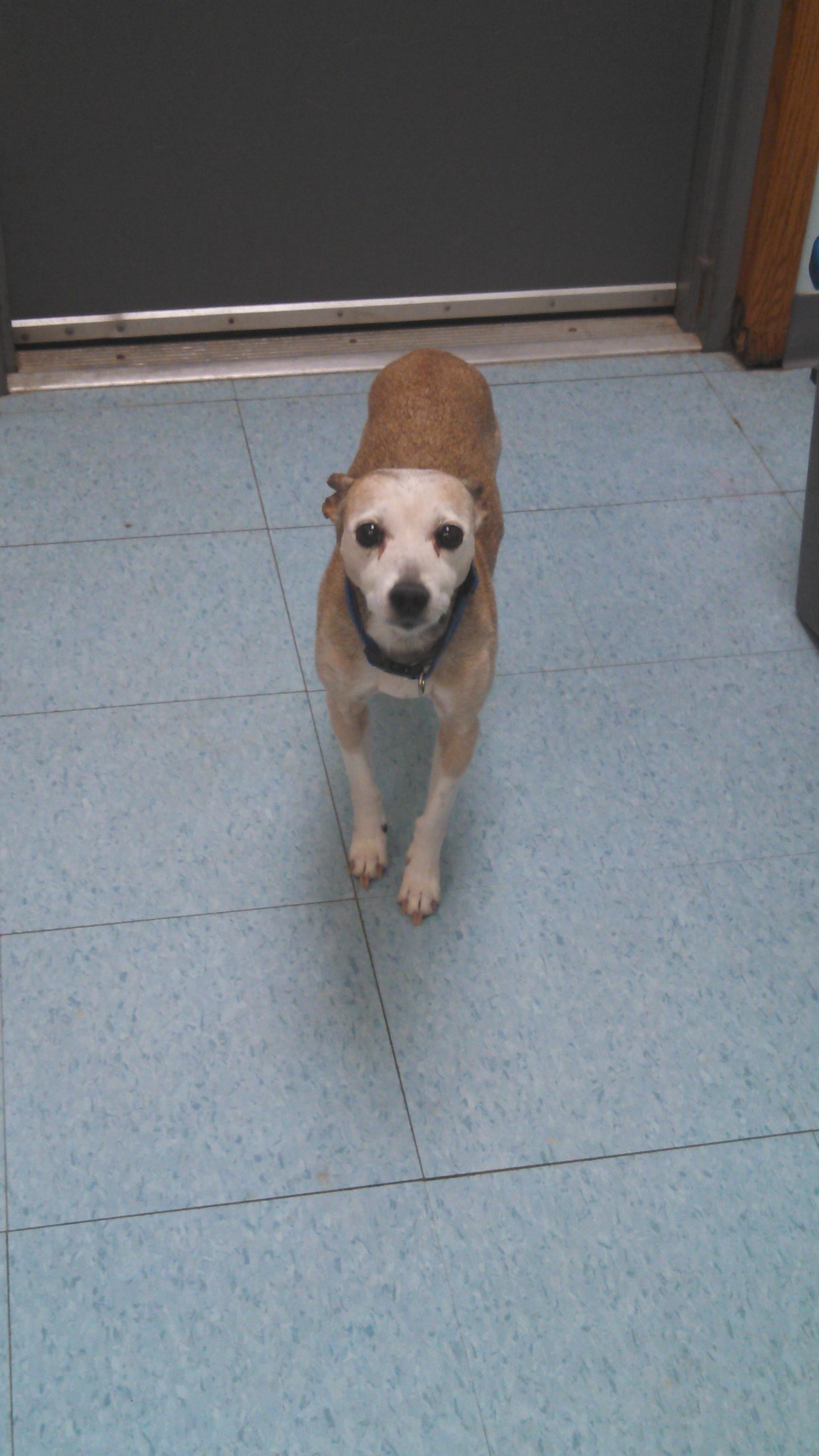 terrier girl 2