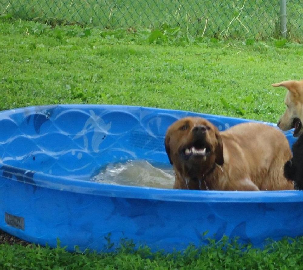 Opie LOVES the pool!
