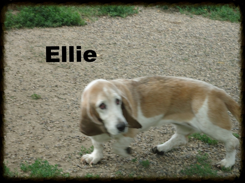 Meet Ellie the first of our trio!
