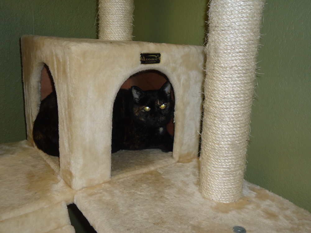 Lini is really enjoying this comfy cat castle!