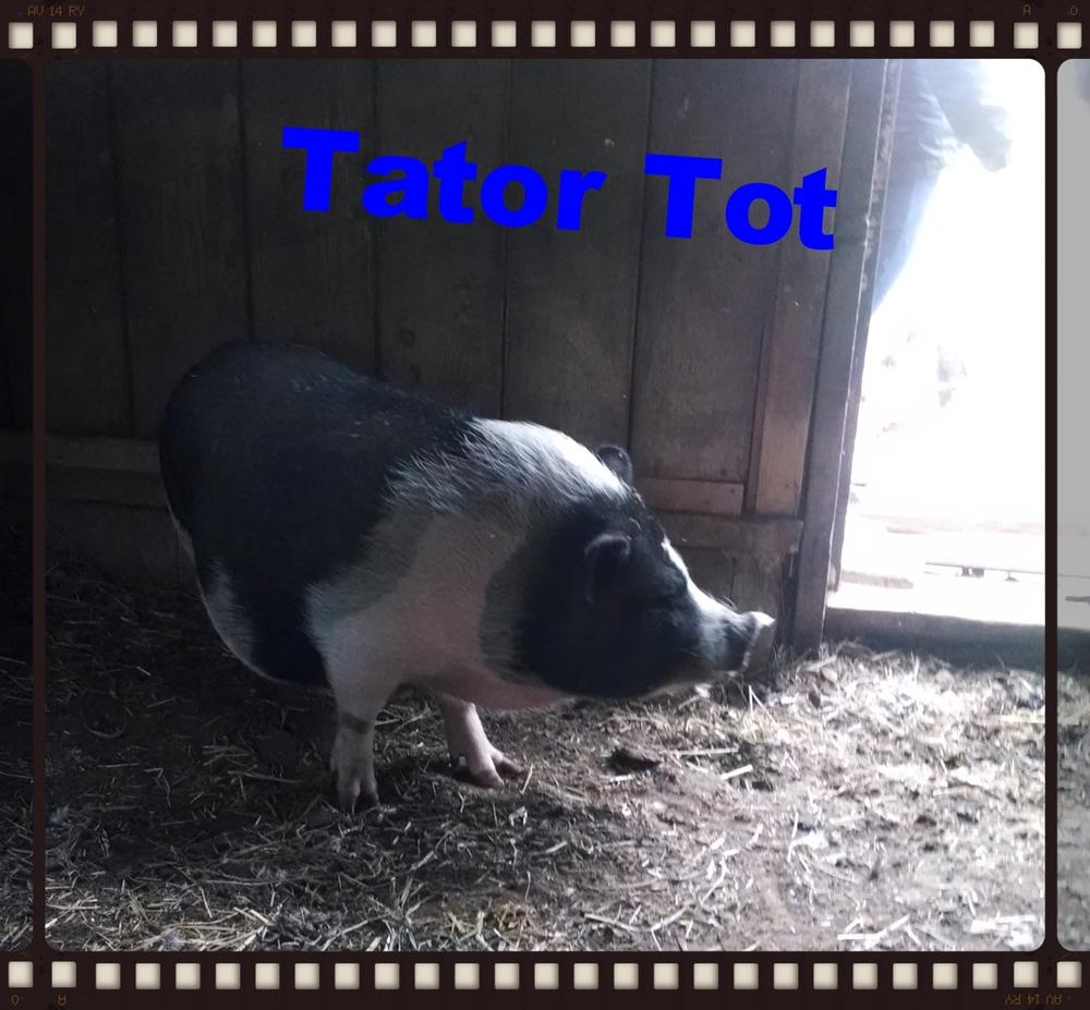 Tator Tot after his trimming!