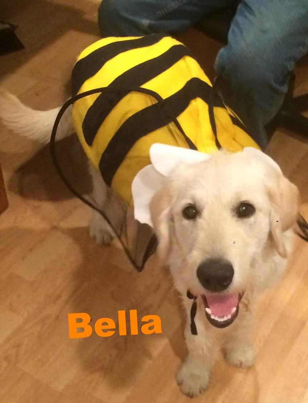 Bella the bee !