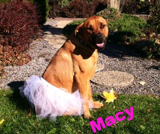 Macy the ballerina!