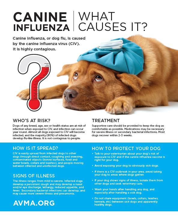 Canine influenza handout 4.jpg