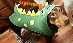 Optimus the Dinosaur!