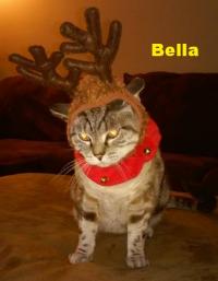 Bella the Reindeer!