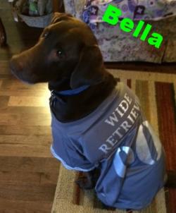 Bella the Wide Retriever!