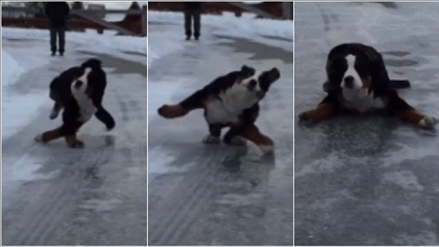Dogs on ice.jpg