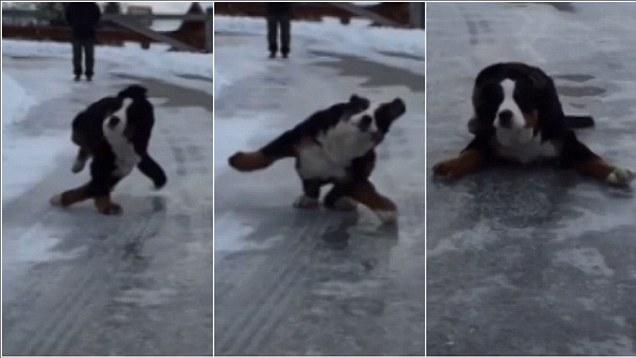 Dogs on ice.jpg