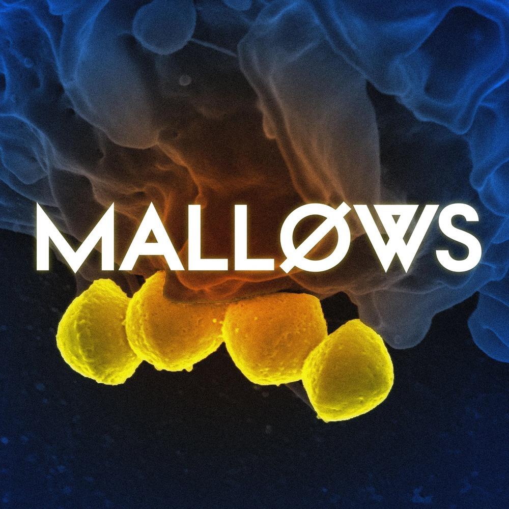 MALLOWS.jpg