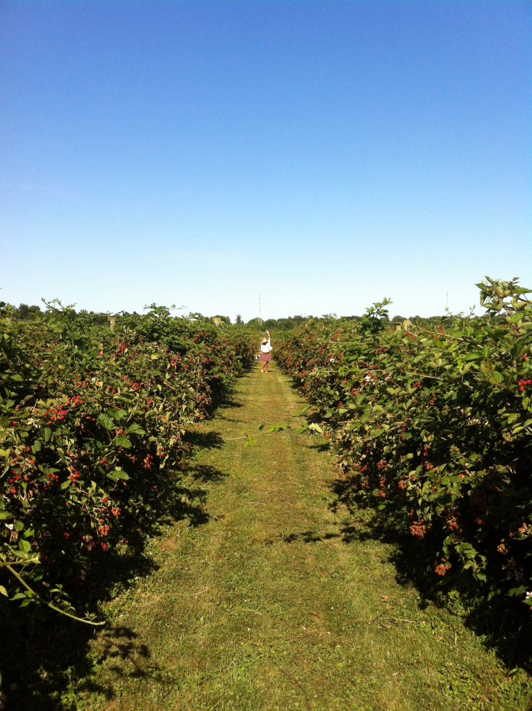 Dancing in strawberry fields at Huber's Farm indiana