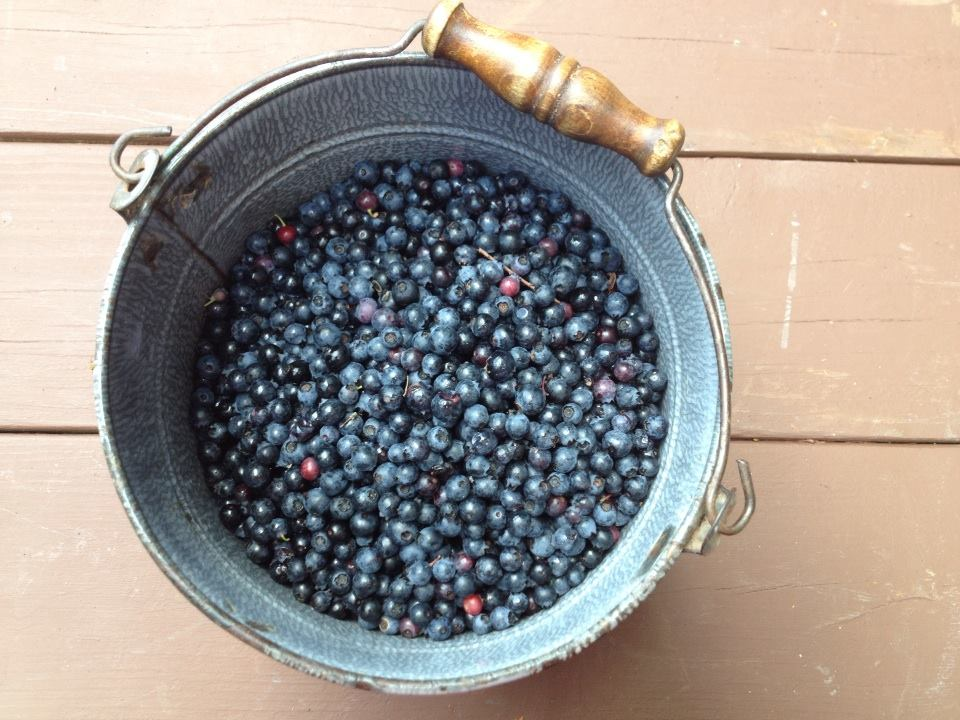 This is my blueberry bucket from the summer of 2014.