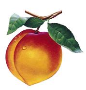 Nectarine Jam.jpg