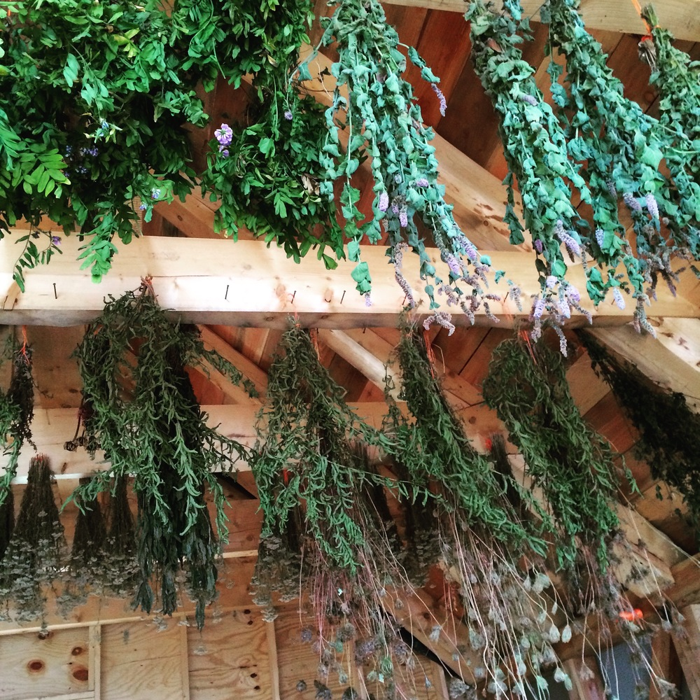 Herbals Drying