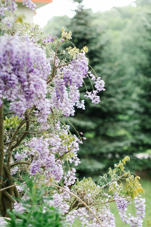 purplespring