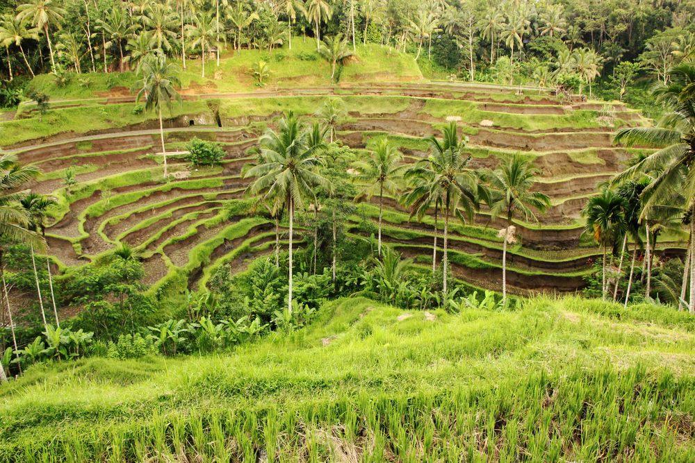 Dette billede er taget af min sjæle veninde Scarlett Wynter, jeg mødte på Bali.