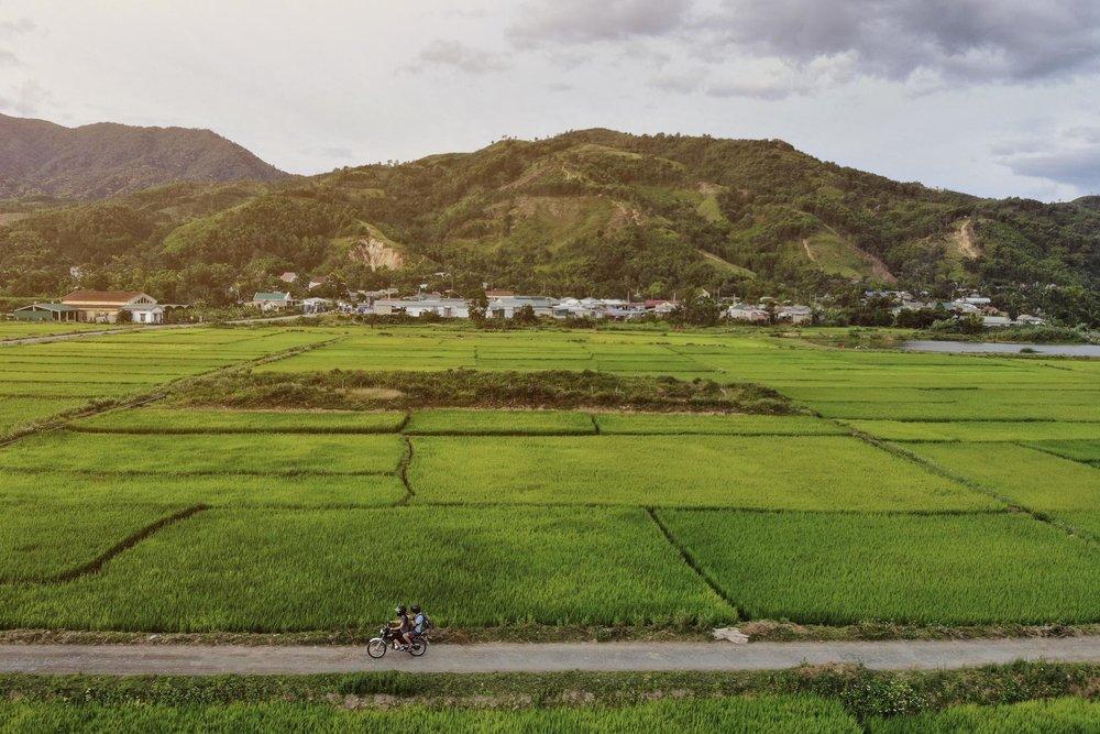Driving through rice paddies