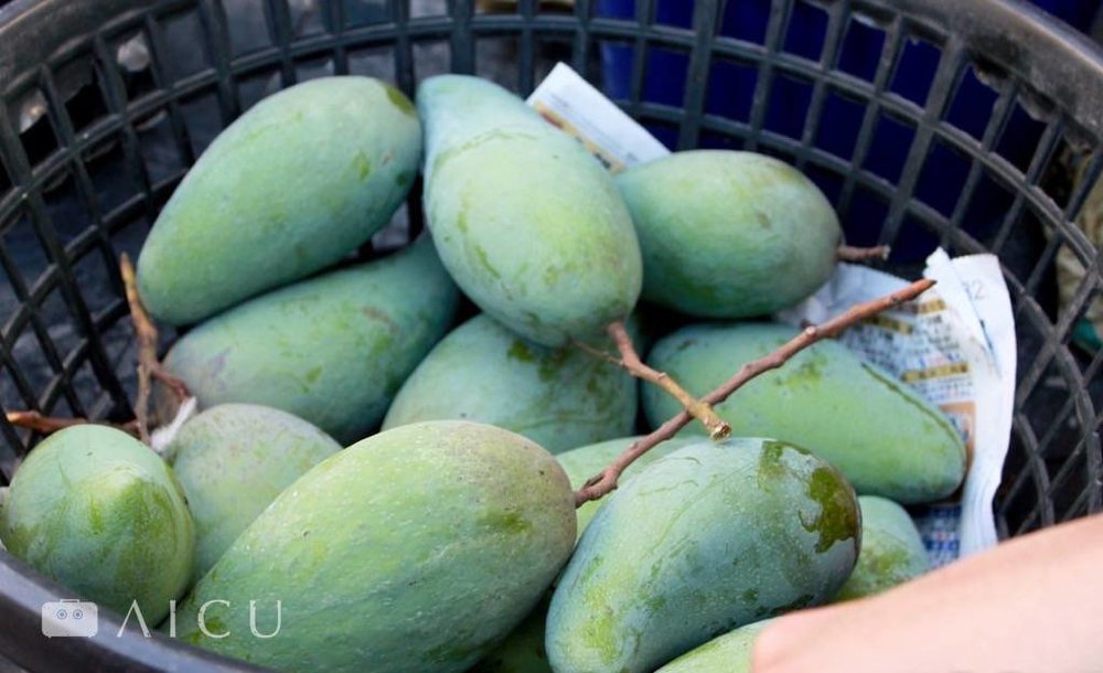 屏東鹽埔的土芒果肉質纖細又厚實。