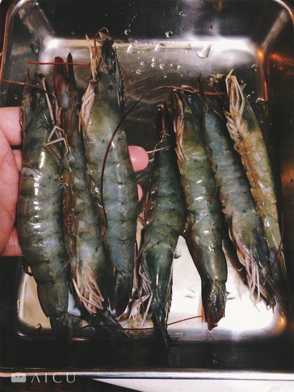 手掌大的白蝦