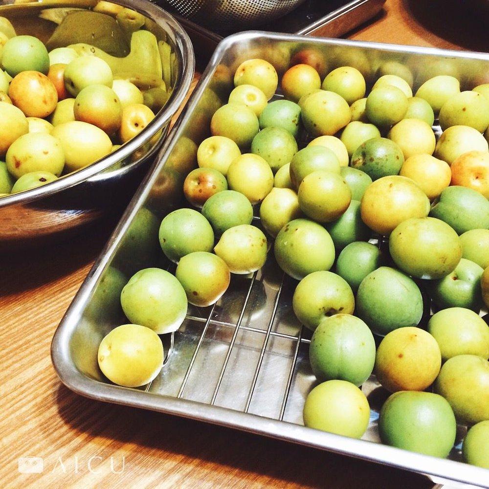 梅子一收到就要儘快加工,避免轉熟成黃。