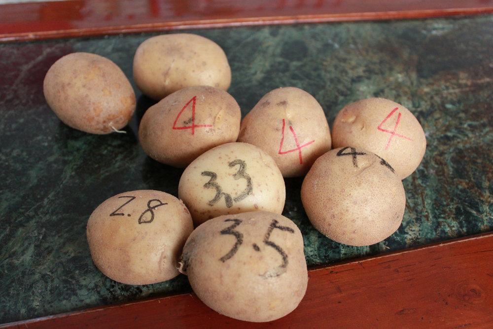 按照等級分類大小的馬鈴薯