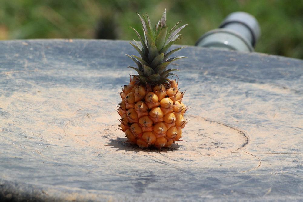 當季水果 - 消暑的秘方01