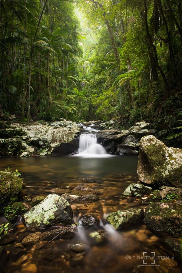 Rainforest Creek, NSW, Australia