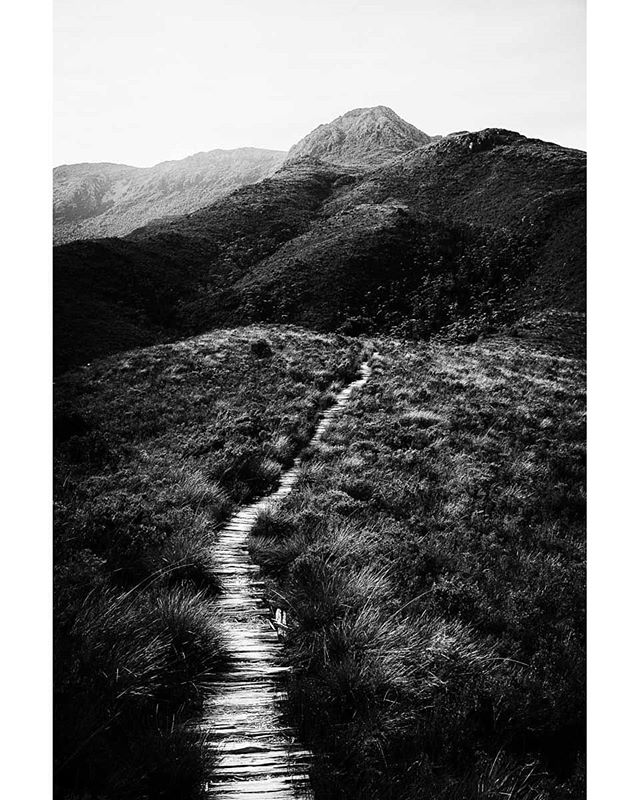 The path to Mt Anne, south west Tasmania, Australia.  www.facebook.com/wildphotoaustralia www.wildphotoaustralia.com  #tasmania #mountains #australia #blackandwhite #monochrome