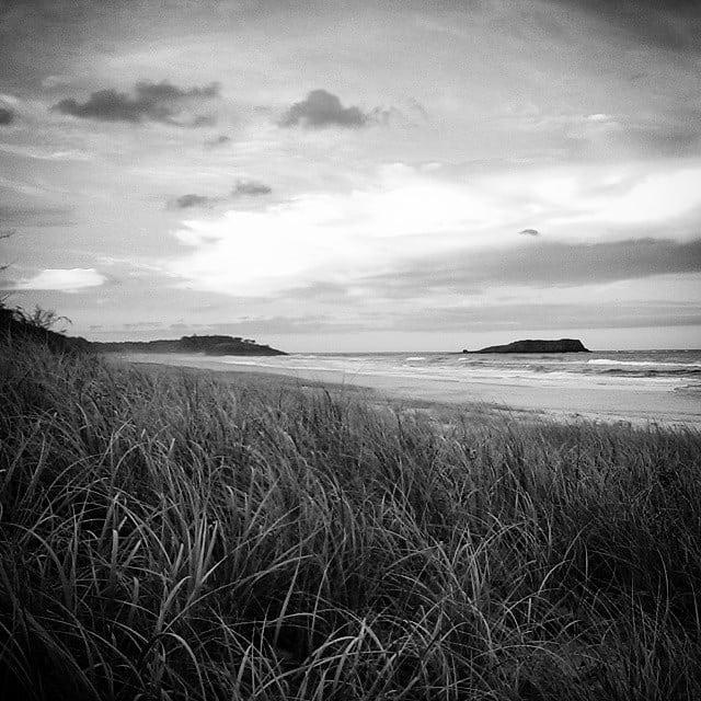 #grass #beach #nsw #blackandwhite #monochrome www.facebook.com/wildphotoaustralia www.wildphotoaustralia.com