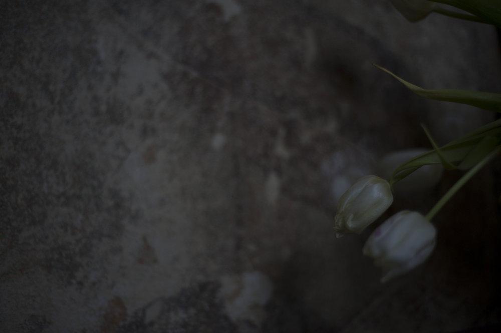 Tulpen_17.JPG