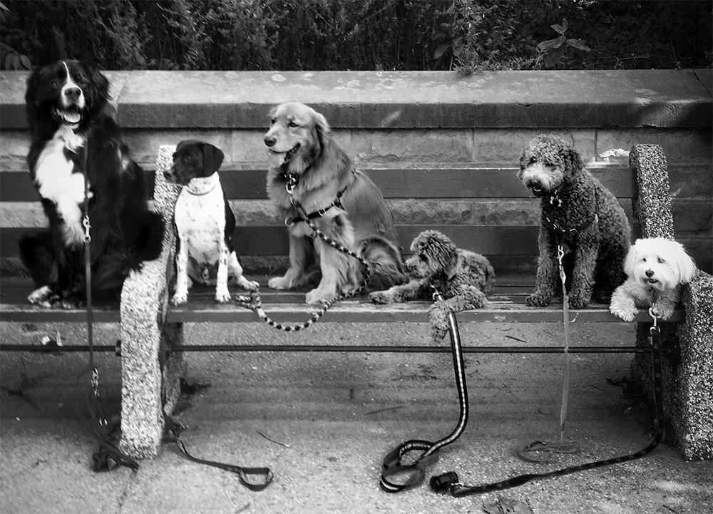 DogBench.jpg