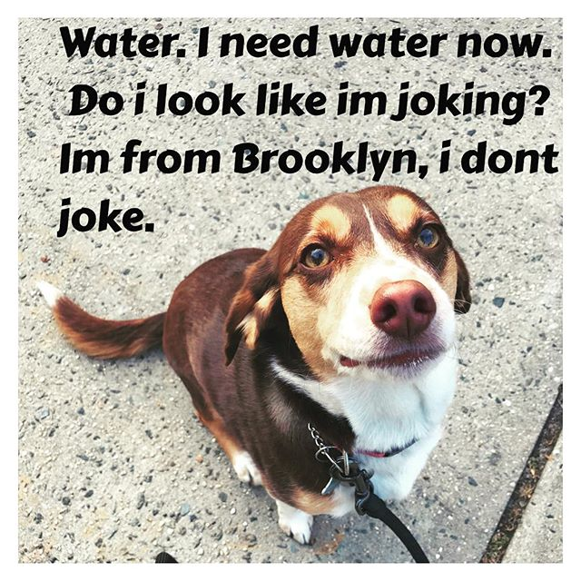 That's right! It's a hot day, we've got to keep our pups hydrated 💧💦 and cool. Especially when they don't take no crap from nobady!!!! Brooklyn in da hooooouse!!!💩🐶💧💦🌞🔥#brooklynstyle