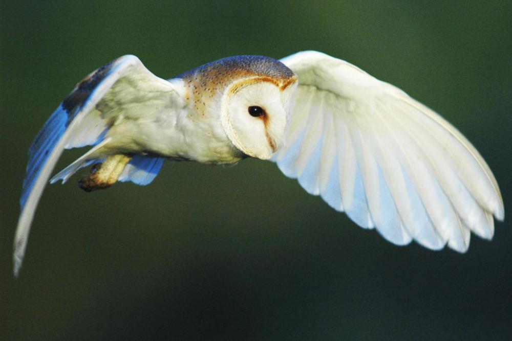 nwt-owl.jpg