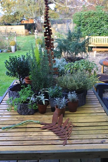 Winter herbs.jpg