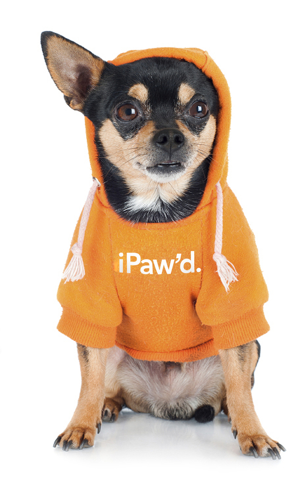 pet_cooldog_24135857_ipawd.jpg