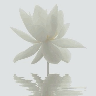 white-lotus-flower.jpg