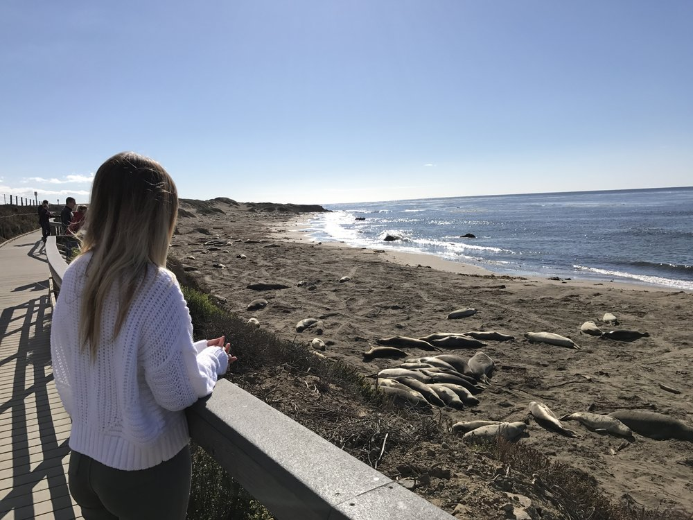 elephant seals 40 hours of freedom vanlife