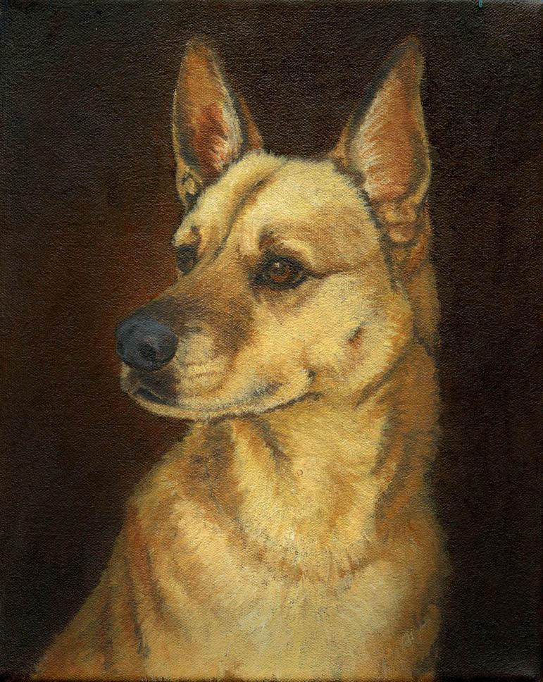 Dog-Portrait-Luckie-2