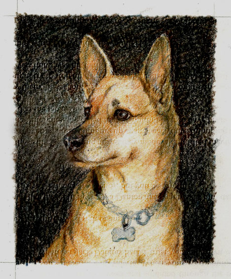 Dog-Portrait-Luckie-sketch