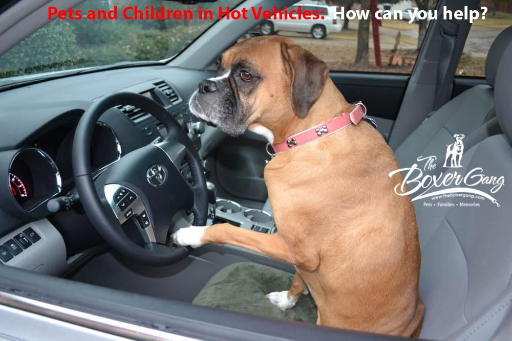 Summer Pet and Children Safety